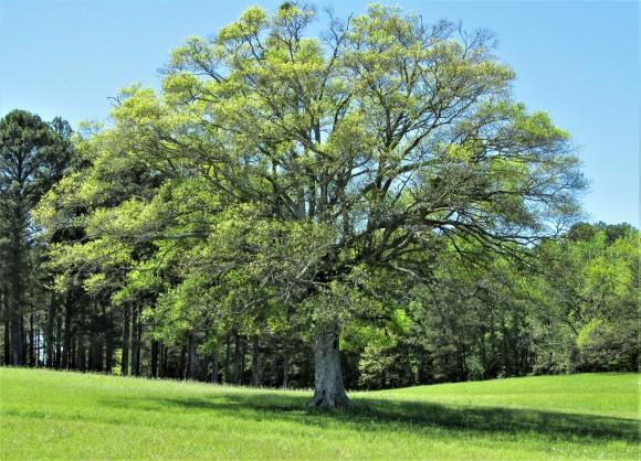 big tree reservoir overlook natchez trace