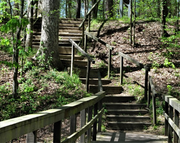 cypress swamp stairs march 2017
