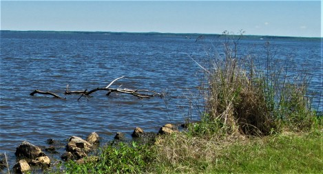 fallen limb in reservoir outlook march 31