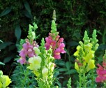 foxgloves ms museum of art april 23
