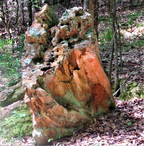 petrified wood april 14