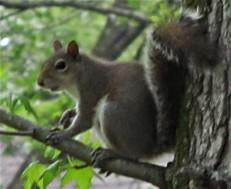 Up a tree jess