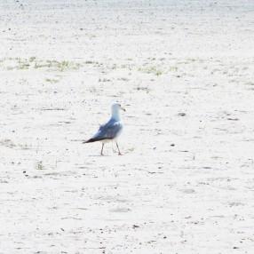 coastal bird 2 may 9