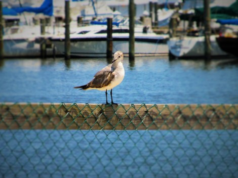 coastal bird may 9