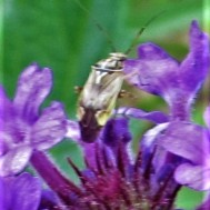 bug on a purple wildflower april 3