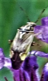 bug on a wildflower april 3