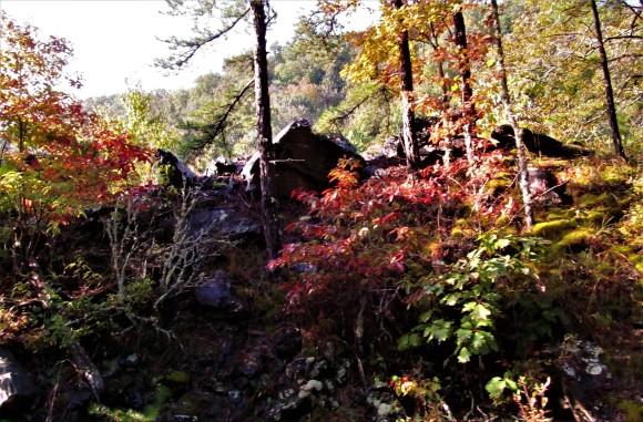 fall color april 22